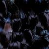 Couverture de l'album Gyu