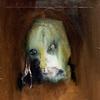 Cover of the album Seven Horses for Seven Kings